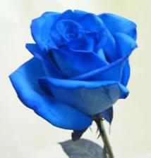 sky blue roshe  An adapted folktale f...